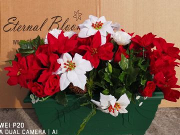 Red & White poinsettia & Rose- 50cm Green Trough